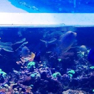 aquarium porte dorée0109