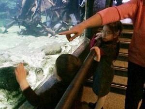 aquarium porte dorée0114