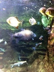 aquarium porte dorée0126