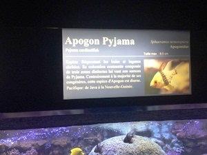 aquarium porte dorée0131