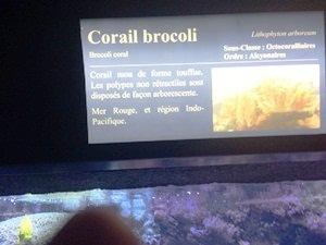 aquarium porte dorée0132