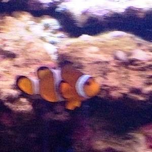 aquarium porte dorée0142