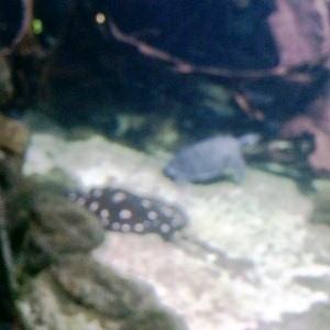 aquarium porte dorée0151