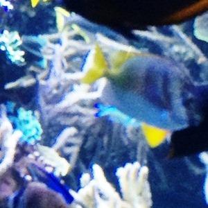 aquarium porte dorée0159