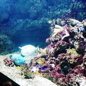 aquarium porte dorée0161