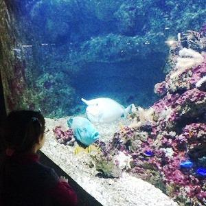 aquarium porte dorée0162