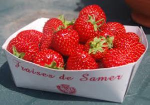 fraises de Samer