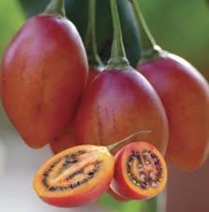 tomate en arbre