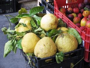 citron de sorrente