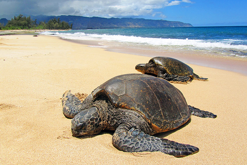 voir des tortues au sri lanka