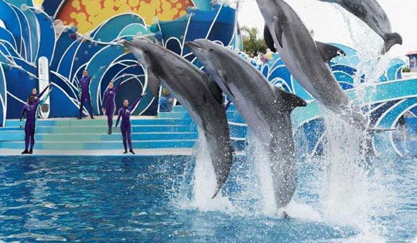 Delfin Show Sea World