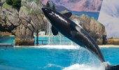 SeaWorld i San Diego
