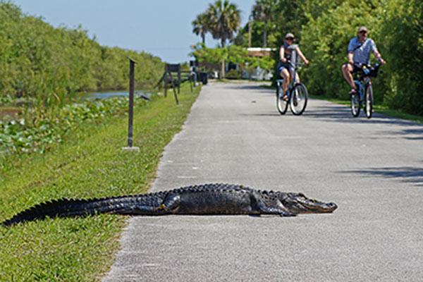 Everglades Shark Valley