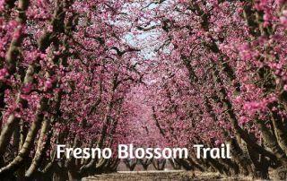 Fresno Blossom Trail