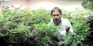 Beginners Tips To Grow Weed Indoors