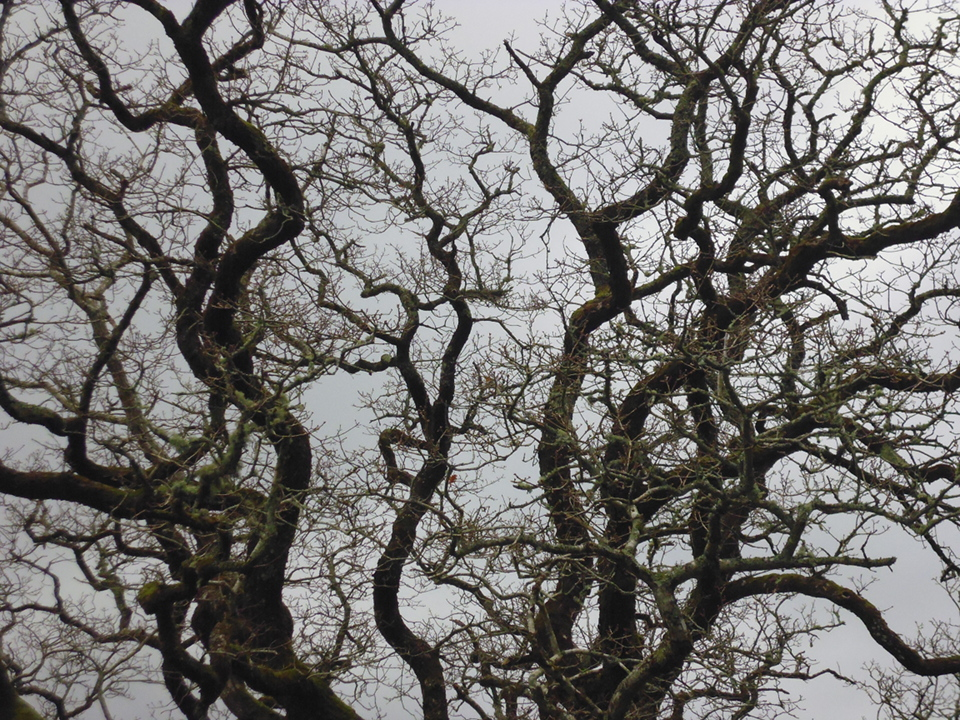 bare tree P1010275