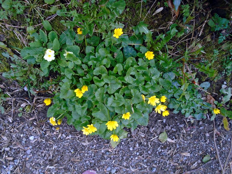 flowers DSC00121