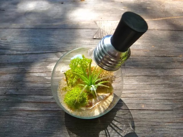 17 Light Bulb Terrarium DIY Ideas  Guide Patterns