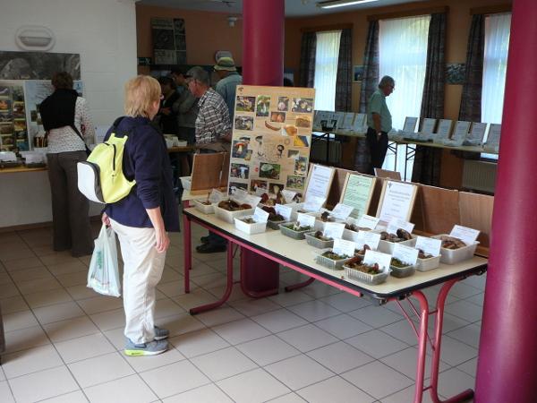 Exposition de Champignons des bois