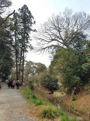 Fushimi Inari-taisha stray