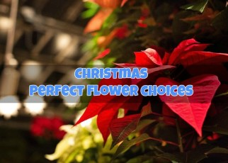 winter-christmas-perfect-flower-choices