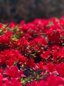 CoronaVirus-Aggiornamento-11-aprile-2020-Il-nostro-giardino