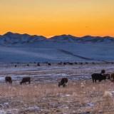 L'inverno in Mongolia