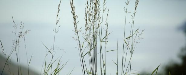 A Naranch anche i fili d'erba possono rilassarsi godendosi la brezza del lago di Garda!