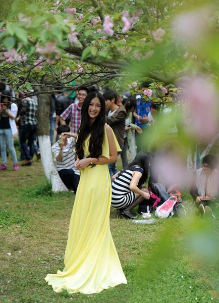Cherry Blossom Festival in Nanxi Mountain Park,Guilin