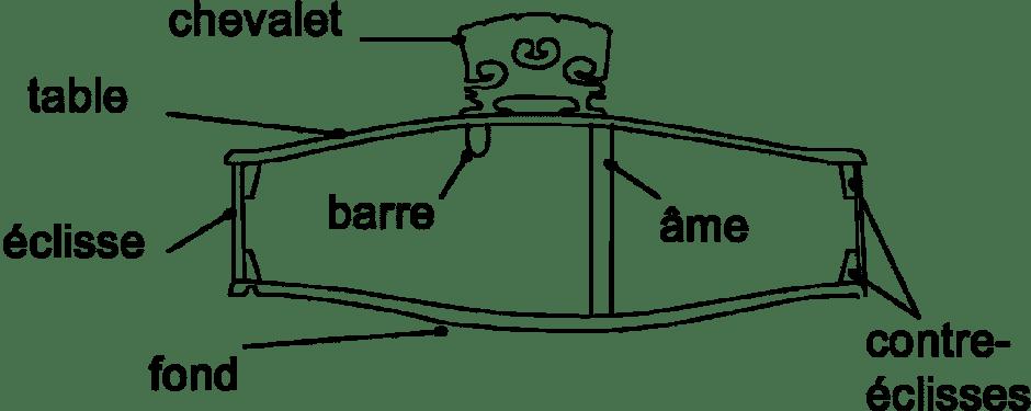 Schéma d'un violon en coupe transversale