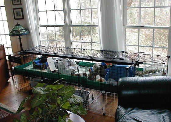 Guinea Lynx Housing