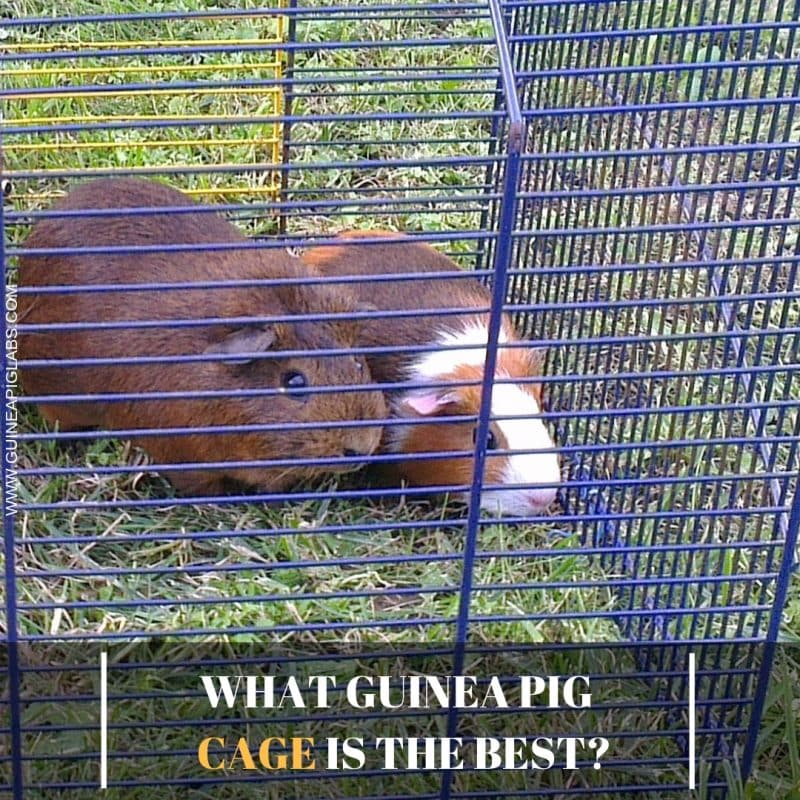 What Guinea Pig Cage is the Best