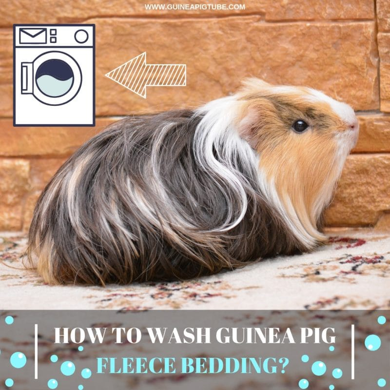 How to Wash Guinea Pig Fleece Bedding