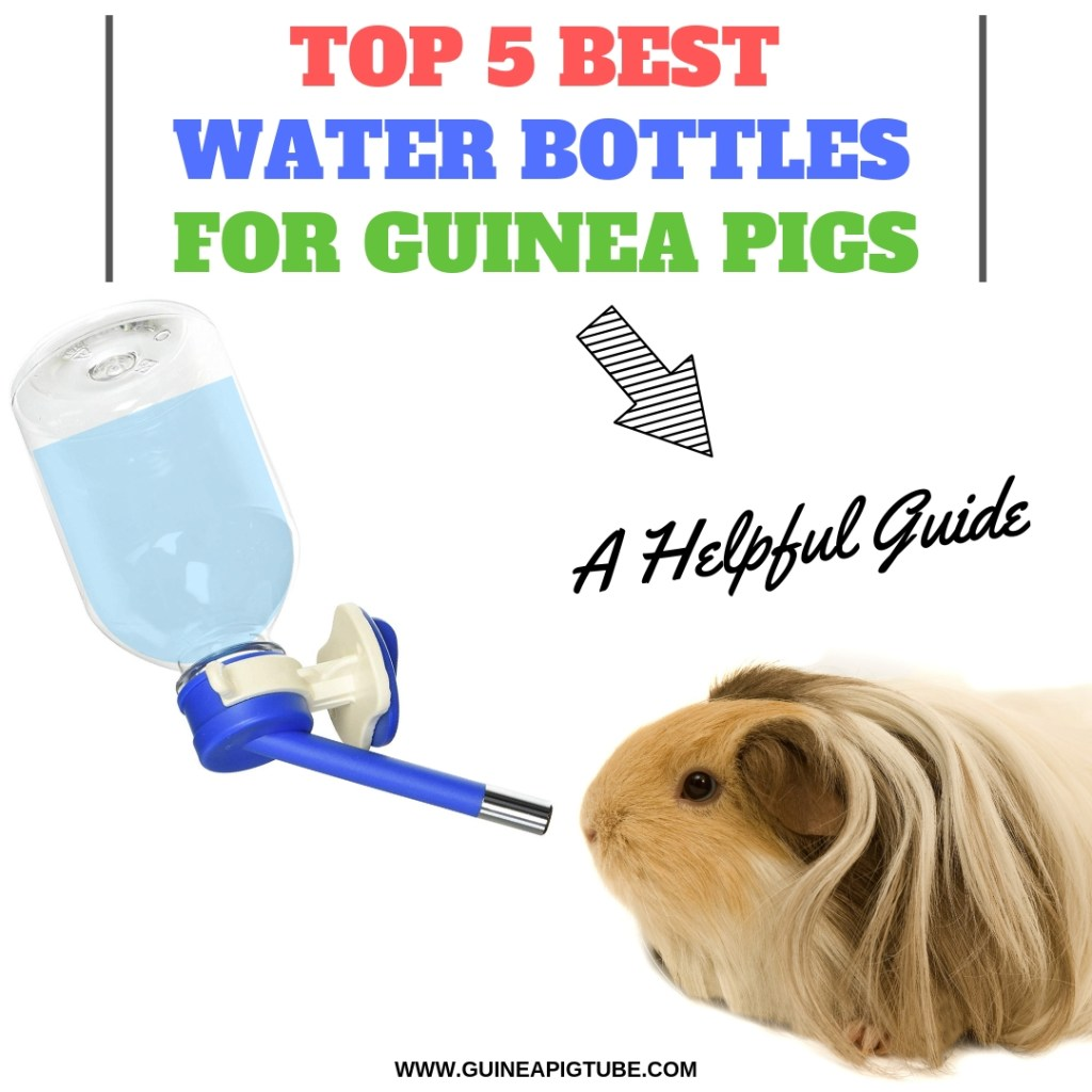 Best Water Bottles for Guinea Pigs A Helpful Guide