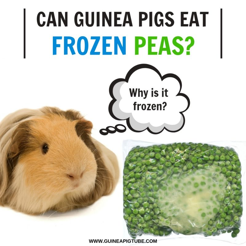 Can Guinea Pigs Eat Frozen Peas