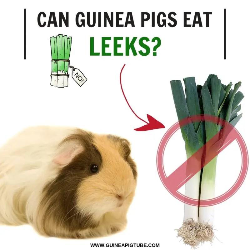 Can Guinea Pigs Eat Leeks
