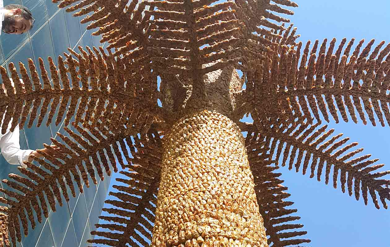 Enormous Palm Tree Made Of Fruit Breaks Record At Saudi