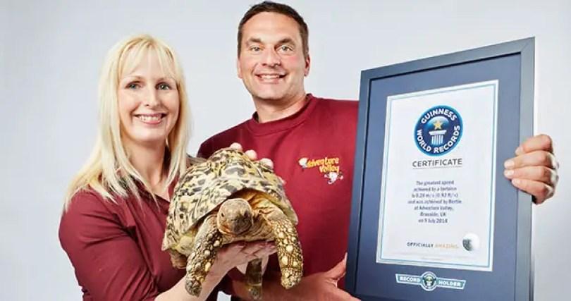 Mais rápido-tartaruga-com-proprietários