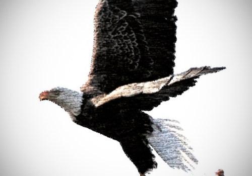 """El Pequeño Cuento de… """"El Vuelo del Pájaro""""…"""