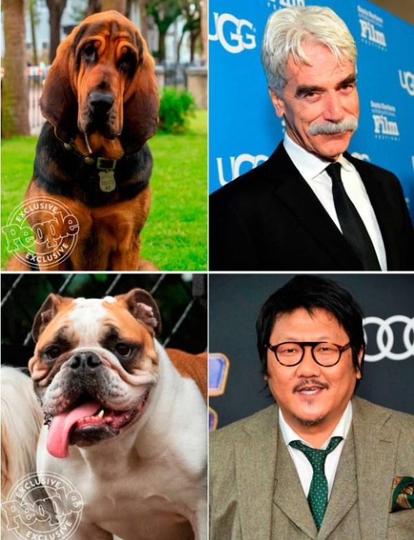 la dama y el vagabundo pelicula 2019 perros 3
