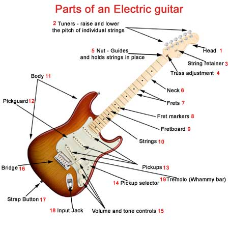 guitar parts diagram where are my kidneys located of an electric what makes a unique the so that s does