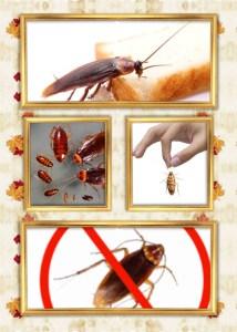 شركة مكافحة حشرات داخل الجهراء