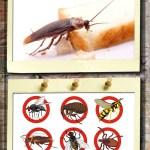 مكافحه حشرات المنزل