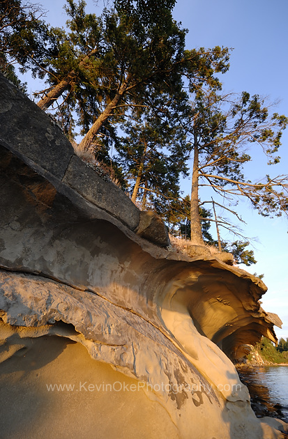 Weathered sandstone and arbutus trees at the Malaspina Galleries, Gabriola Island, BC