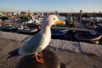 Seamus the Seagull standing on bollard at Setubal Harbour
