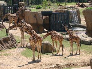 bishops zoo 015