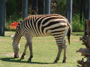 bishops zoo 016