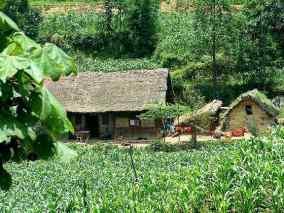 Tata Cara Memperoleh Tanah Garapan