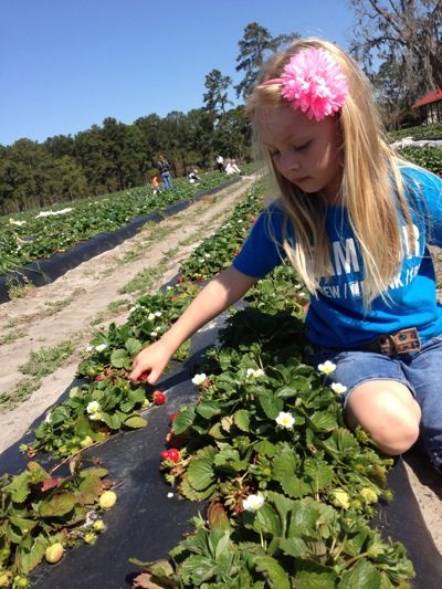 Pickin' Strawberries