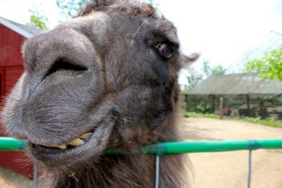 Llama Gets Personal